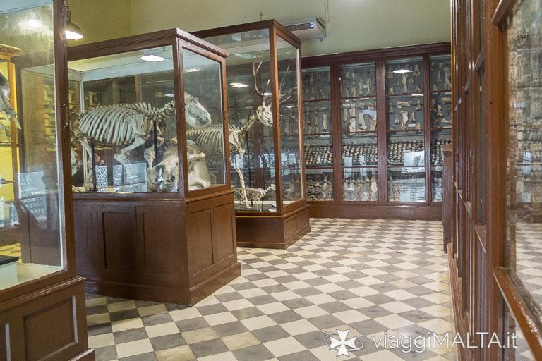 interno del Museo di Ghar Dalam